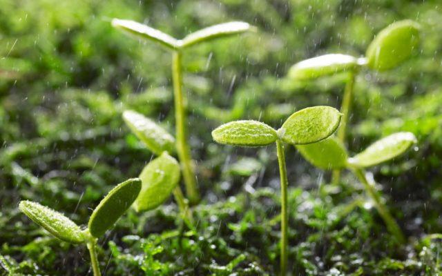 Как сделать эффективное удобрение из сорняков и банановых шкурок