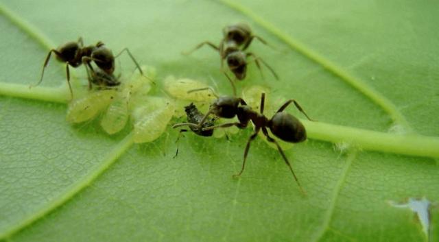 Муравьи всегда и везде: в чем заключается польза и вред от насекомых