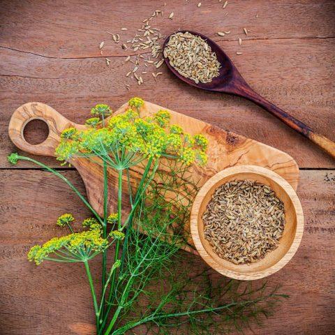 Какие полезными свойствами обладают семена укропа