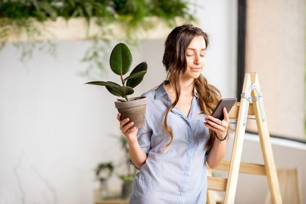 Не приживаются комнатные растения, приобретенные в магазине: почему это происходит и что предпринять