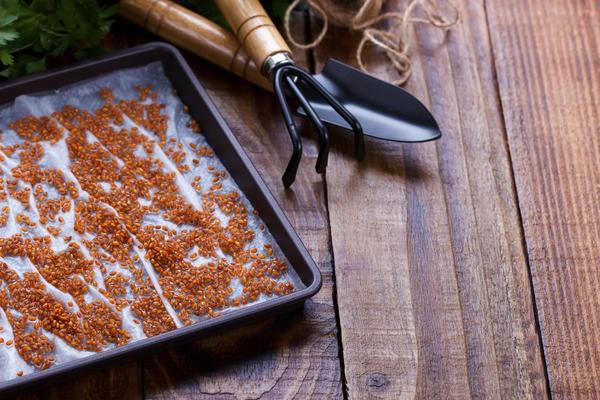 Выращивание микрозелени в домашних условиях: несколько проверенных способов