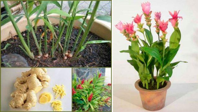 Как вырастить съедобные растения на подоконнике