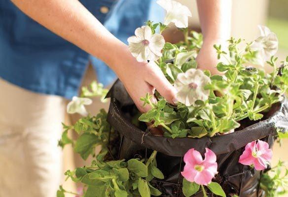 Какие цветы выбрать для подвесных кашпо