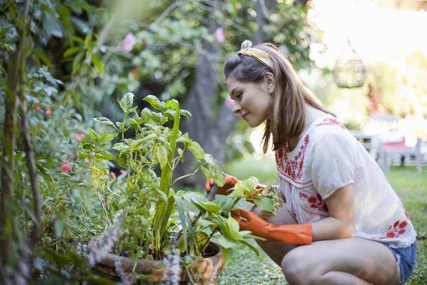 Как размножать растения черенкованием