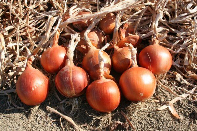 Хитрости подготовки лука, укропа, кабачка и других семян к посадке