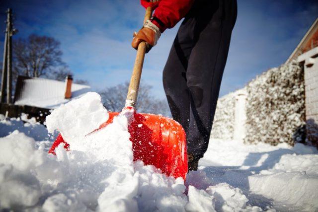 Есть ли польза от утаптывания снега вокруг деревьев