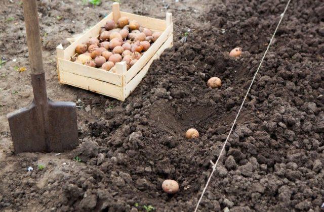 Устаревшие садовые правила, от которых стоит отказаться