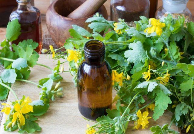 Лечебные травы: правила сбора и применения