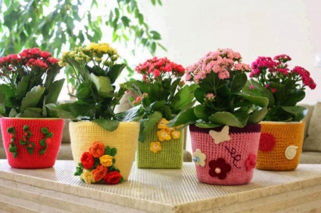Можно ли дарить цветы и саженцы в горшках