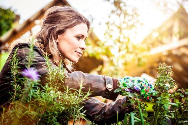 Как избавиться от стойких сорняков: борьба, которую лучше начинать с весны