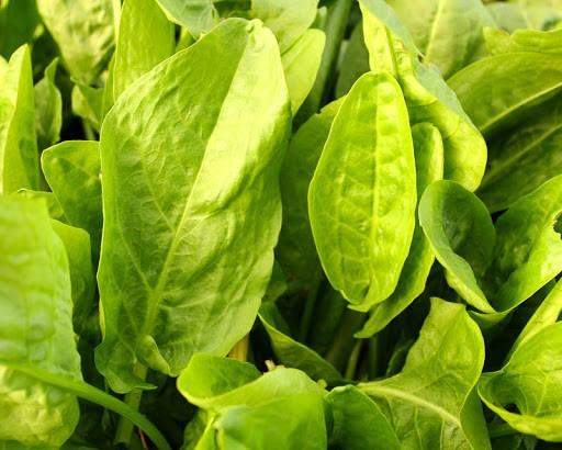 Необычные виды зелени для посадки на даче