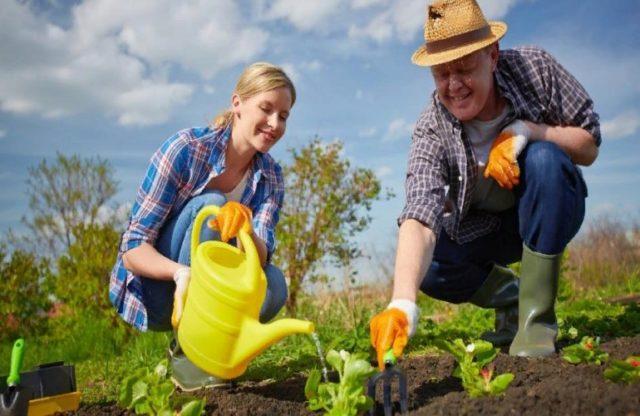 Что можно порекомендовать начинающим огородникам