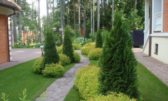 Деревья, которые не стоит сажать рядом с домом