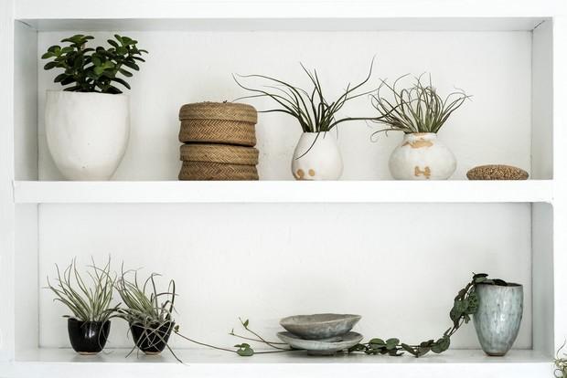 Влажность и темнота им не страшны: растения, прекрасно чувствующие себя даже в ванной комнате