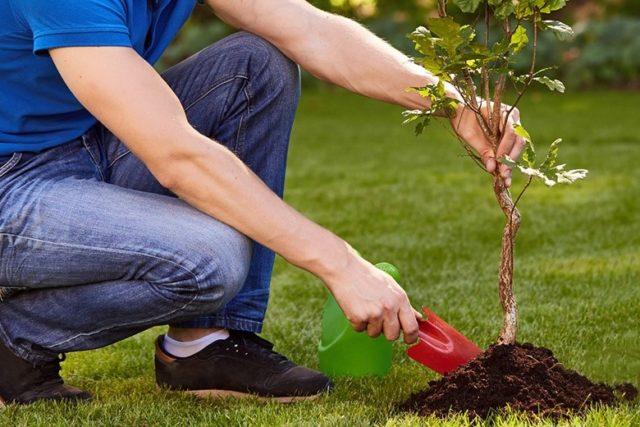 Садоводство снимает стресс: доказано учеными