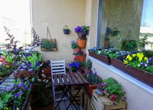 Цветы, которые пригодны для посадки на балконе