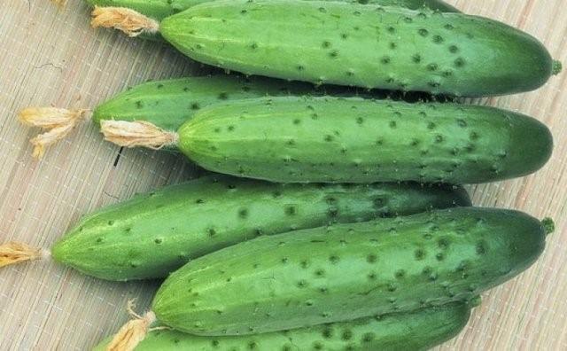 Популярные сорта огурцов для посадки в теплице
