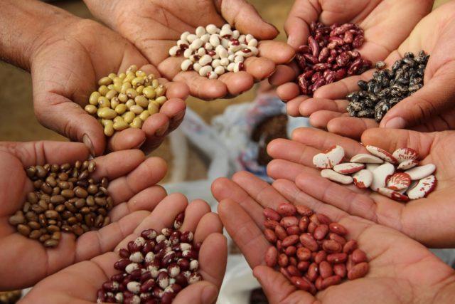 Как выбрать «правильные семена» для рассады и богатого урожая