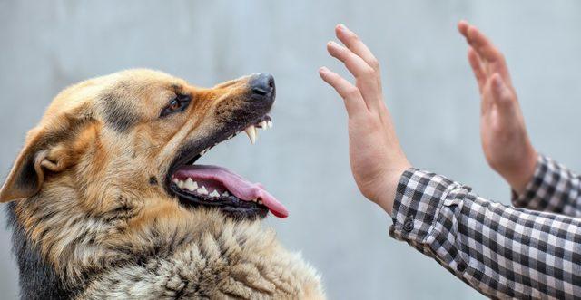Бродячие животные и бешенство: почему не надо подкармливать животных на даче