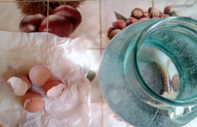 5 натуральных подкормок рассады: на заметку огородникам