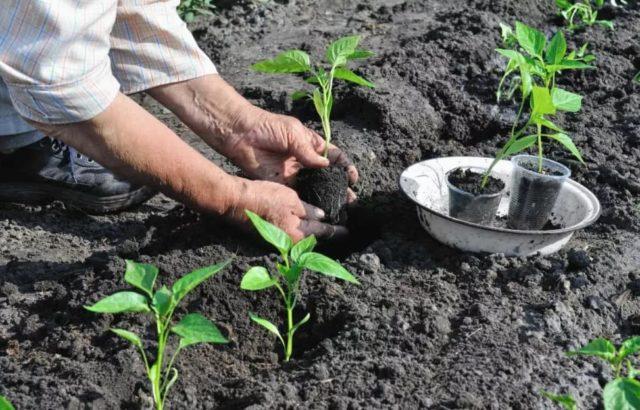 Как подготовить рассаду к высадке