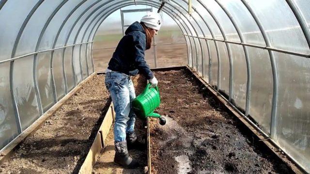 Правила высадки рассады: особенности переселения в грунт перцев и томатов