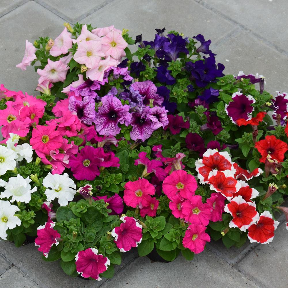Какие цветочные и овощные культуры можно высеивать на рассаду в марте
