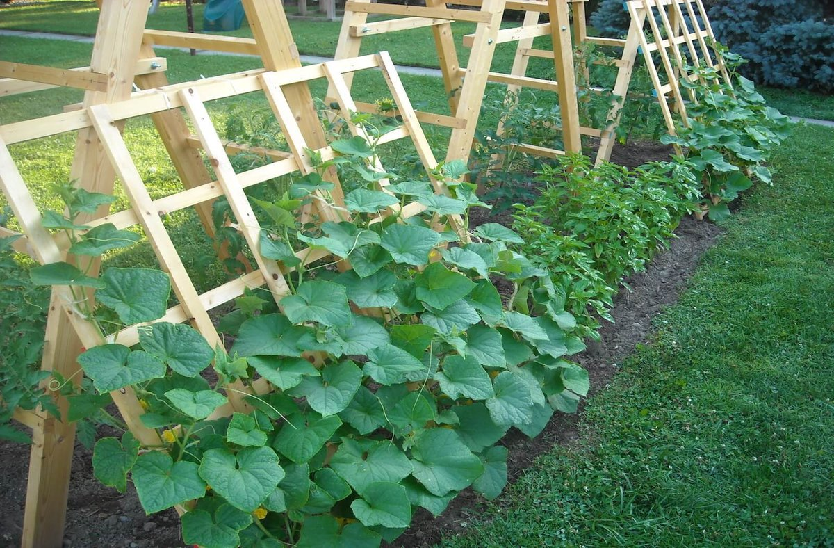 Почему огурцы дают плохой урожай, и что с этим делать