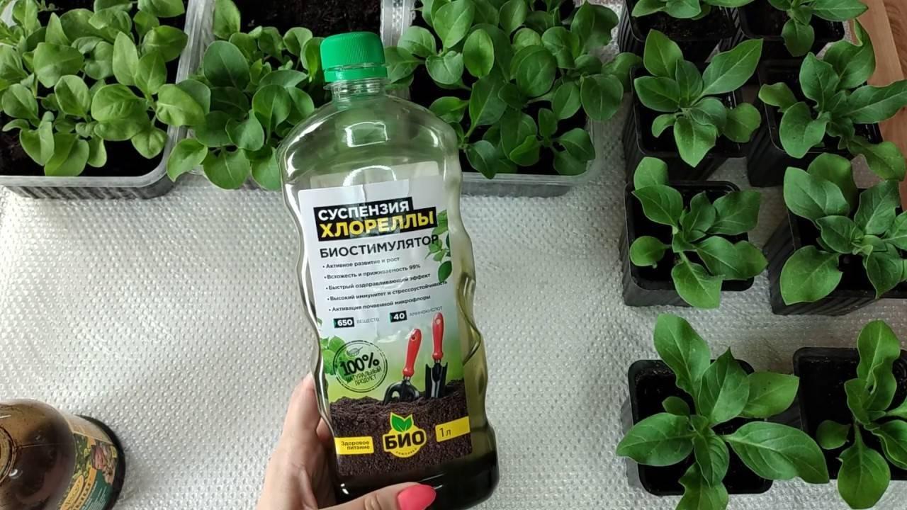 Как правильно подкармливать петунии на всех этапах выращивания