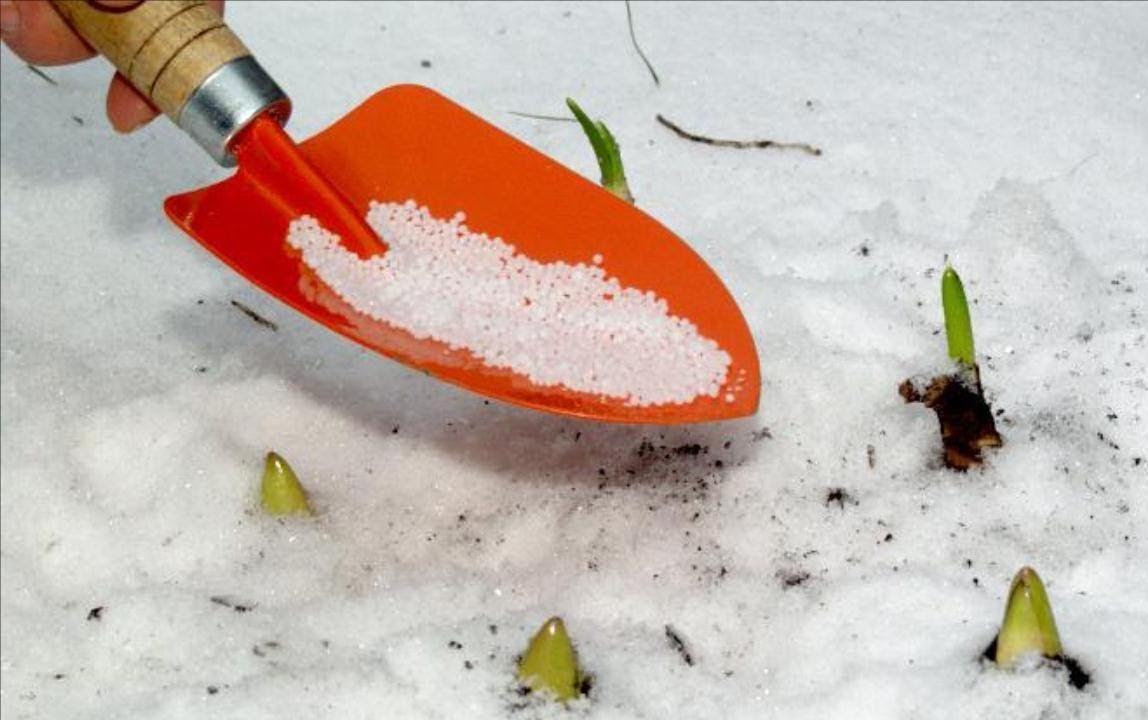 Можно ли вносить удобрения, если на участке еще лежит снег
