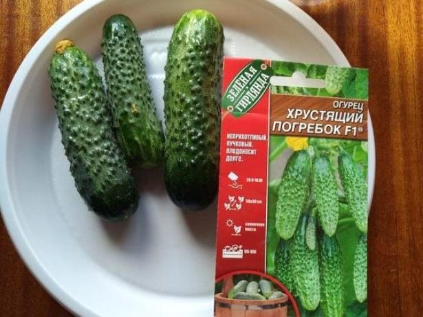Сорта урожайных гибридов огурцов, которые не доставят хлопот
