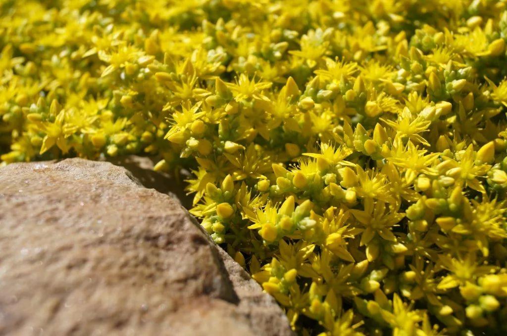 Какие цветы можно сажать на песчаной почве