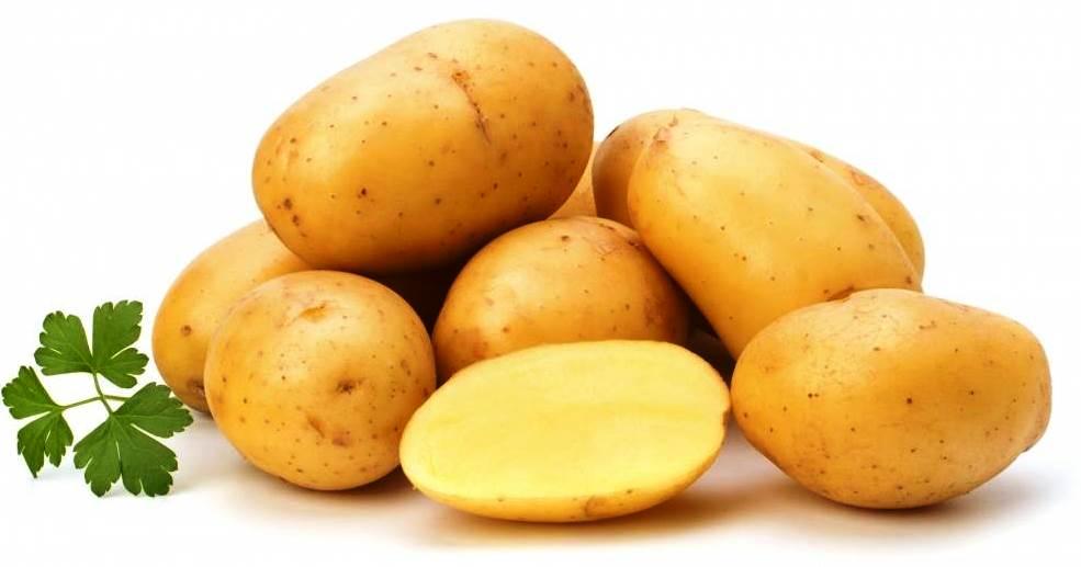 Сорта картофеля, устойчивые к колорадскому жуку