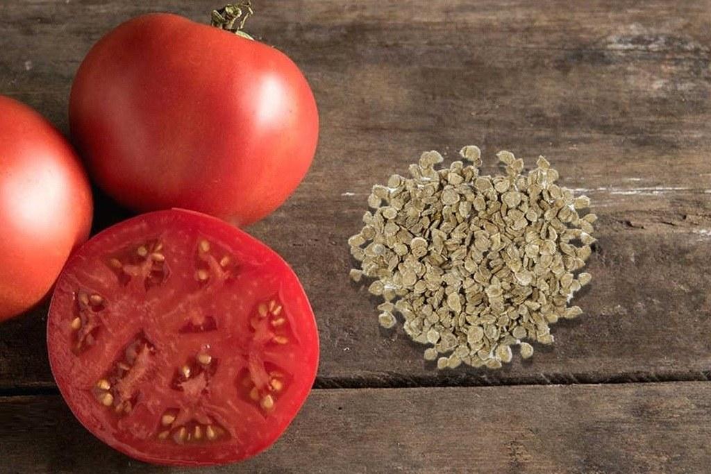 Как вырастить больше томатов в открытом грунте