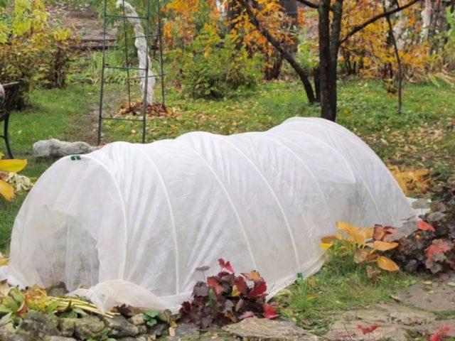 Как правильно посадить розы осенью: сроки, пошаговая инструкция с фото