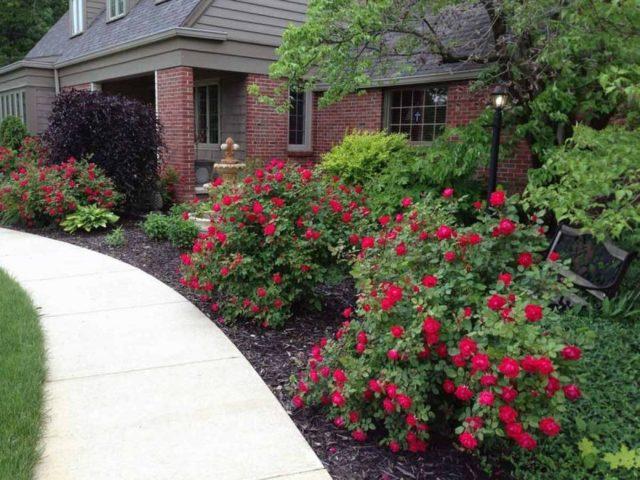 Посадка роз осенью с открытой корневой системой: подробное руководство