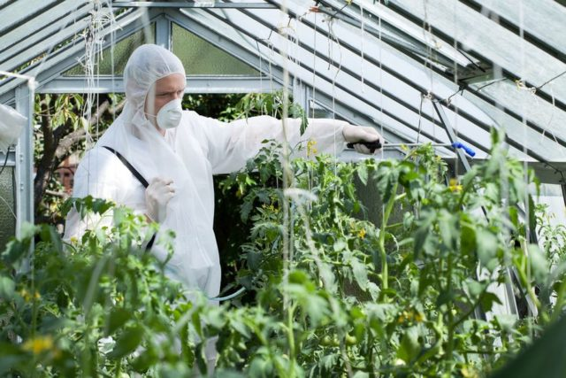 Фунгицид Браво: средство защиты посадок картофеля, овощей и злаковых культур