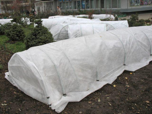 Как укрыть розы на зиму в Подмосковье: правила + секреты успешной зимовки