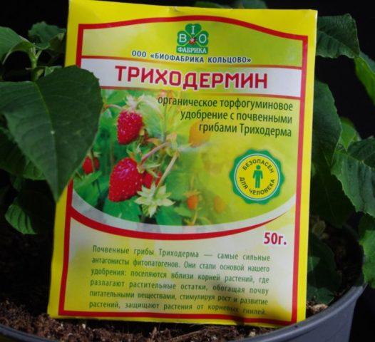 Фузариозное увядание томатов: лечение, фото, первые признаки