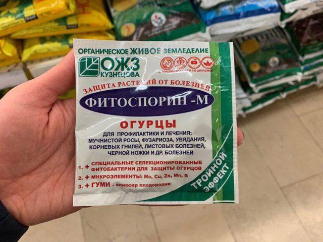 Фитофтора (фитофтороз) огурцов в теплице: фото, описание, лечение