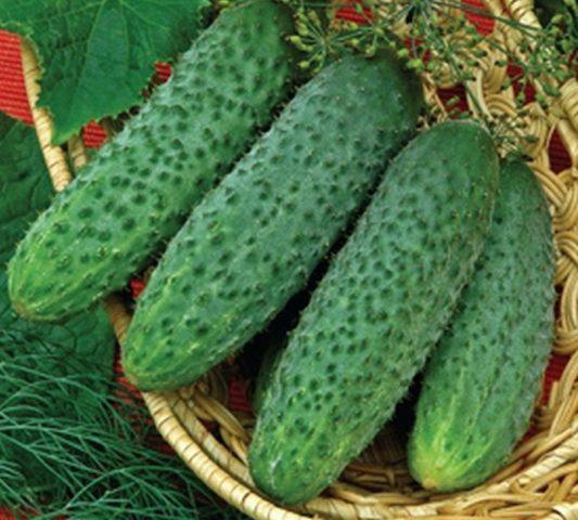 Хлороз листьев огурцов в теплице: фото, лечение, причины