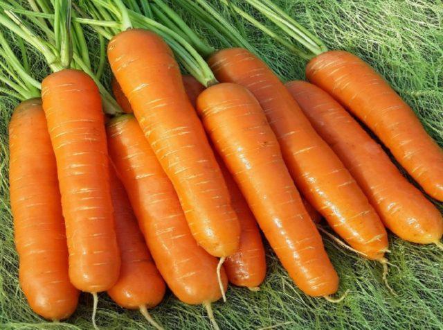 Когда и как сажать морковь на зиму