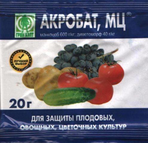 Альтернариоз (сухая пятнистость) на помидорах: как бороться в теплице, фото