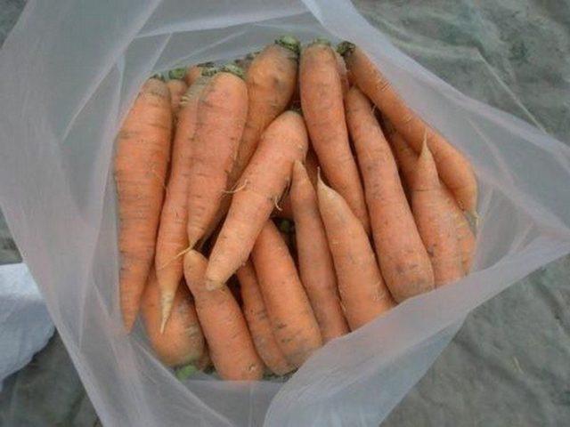 Как правильно хранить морковь в погребе или подвале до весны