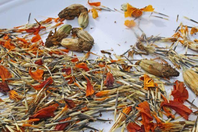 Как правильно собрать семена бархатцев: нюансы + рекомендации