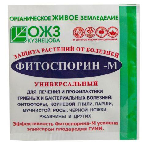 Белая гниль огурцов в теплице: лечение, фото, борьба