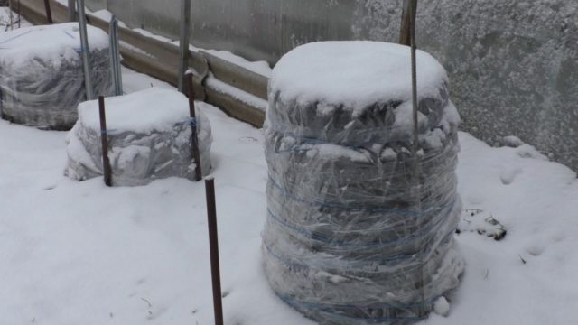 Как укрыть розы на зиму в Сибири: правила подготовки + основные методы