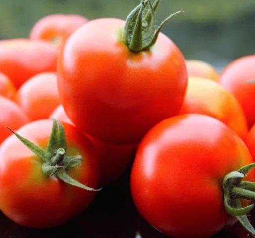Столбур (фитоплазмоз) на томатах: фото, борьба, что делать