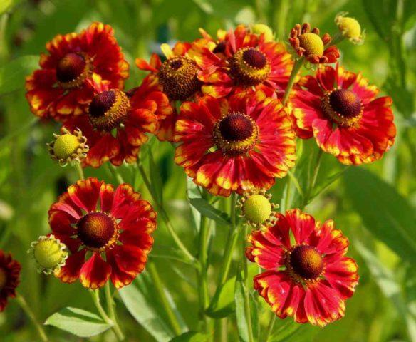 Какие многолетние цветы можно посадить осенью