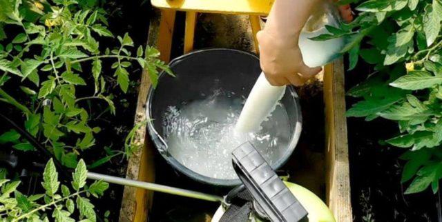 Как опрыскивать и поливать огурцы кефиром